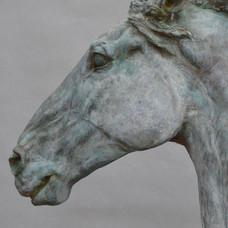 Horse Head VI