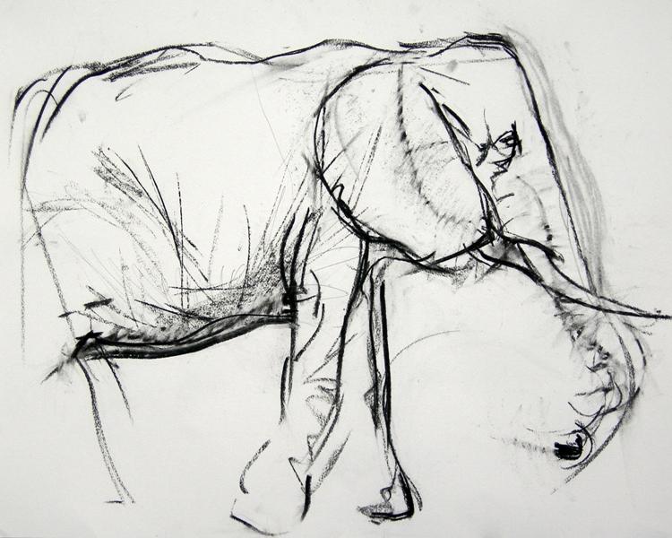 Masai Mara Matriarch