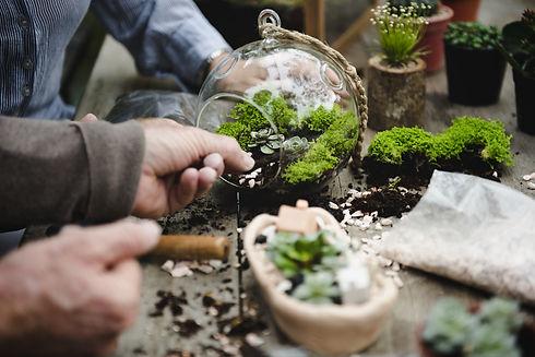 Terrarium Miniature Botanical Horticultu