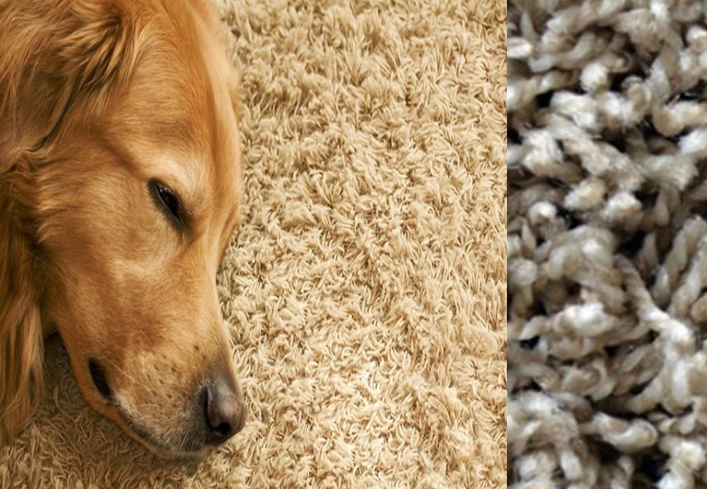 Frieze style carpet.