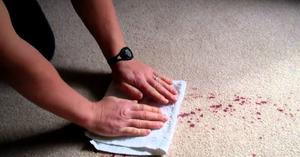 Blotting up wine spilled on carpet.