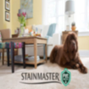 Stainmaster Pet Protect.jpeg