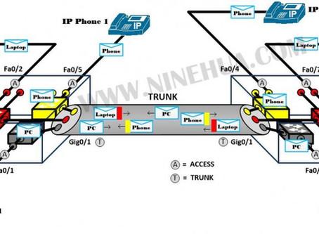 Trunk Port คืออะไร