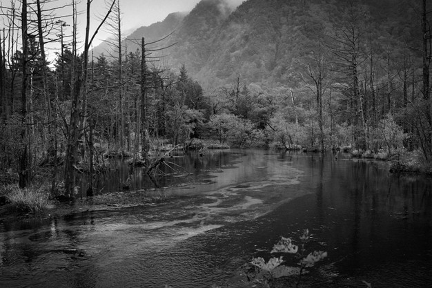 sleeping forest-4.jpg