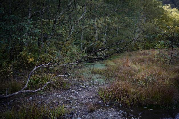 sleeping forest-15.jpg