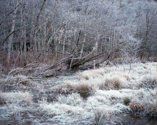 sleeping forest-21.jpg