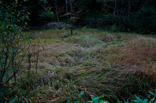sleeping forest-11.jpg