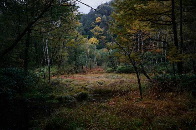 sleeping forest-9.jpg