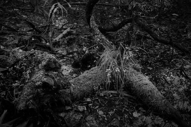 sleeping forest-18.jpg