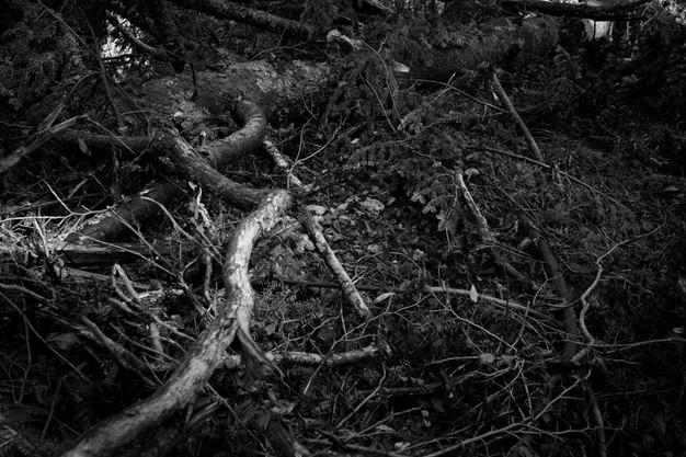 sleeping forest-19.jpg