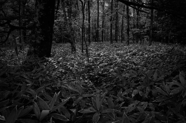 sleeping forest-2.jpg