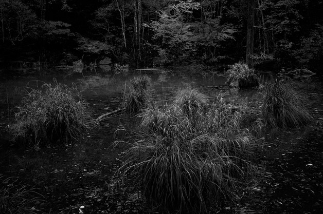 sleeping forest-17.jpg