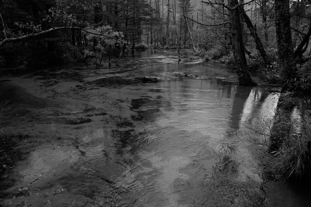 sleeping forest-6.jpg