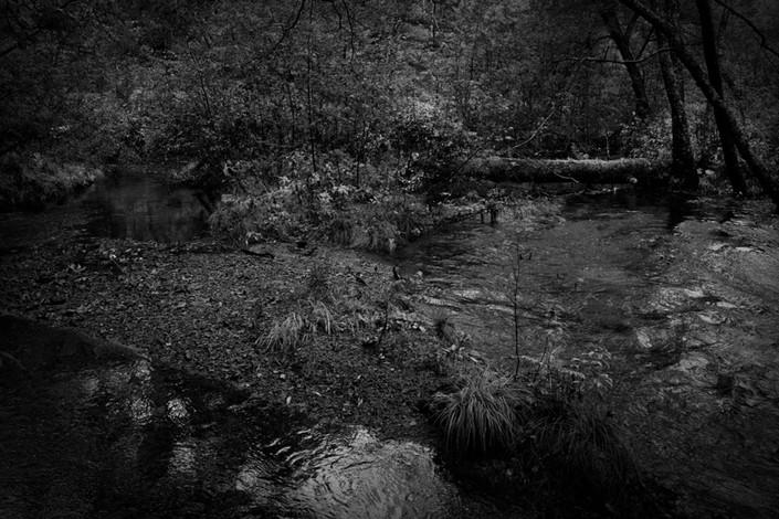 sleeping forest.jpg