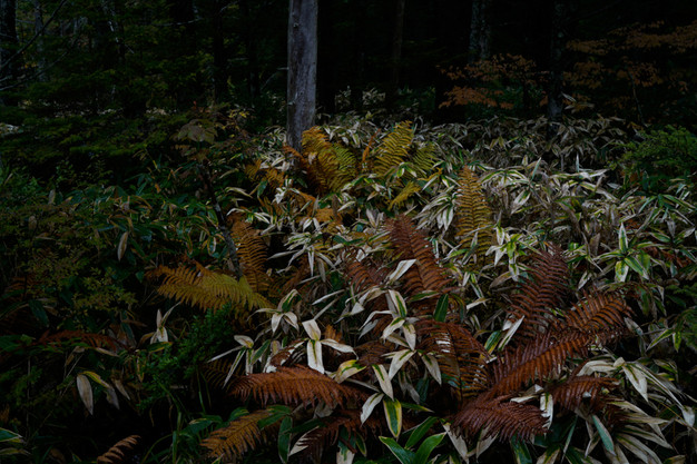 sleeping forest-3.jpg