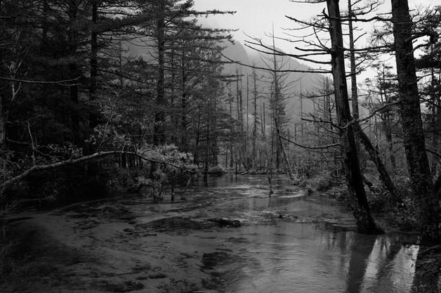 sleeping forest-5.jpg