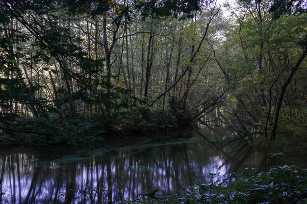 sleeping forest-13.jpg
