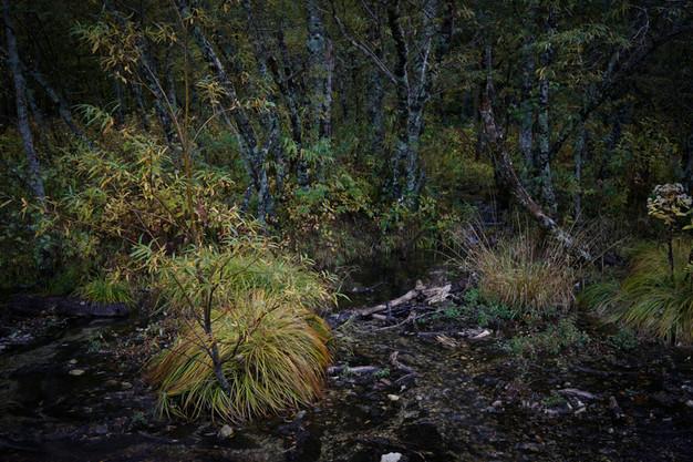 sleeping forest-16.jpg