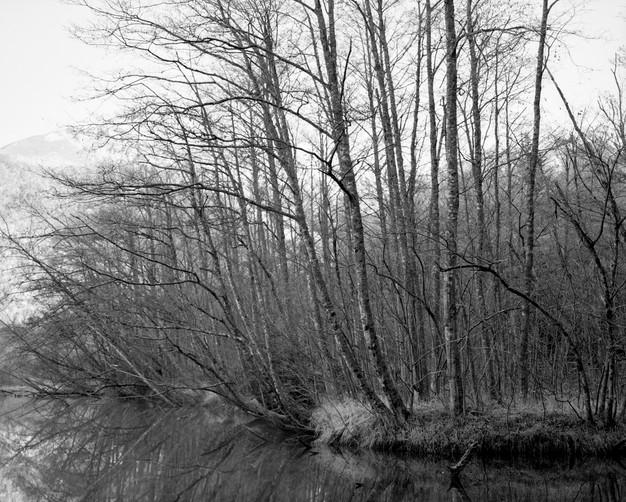 sleeping forest-20.jpg
