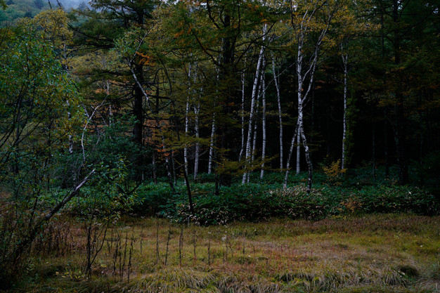 sleeping forest-10.jpg