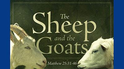 sheep goats.jpg