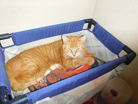 dog and cat kennel
