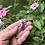 Thumbnail: Pink Sapphire Rosecut