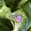 Thumbnail: Rose Quartz with Flower band