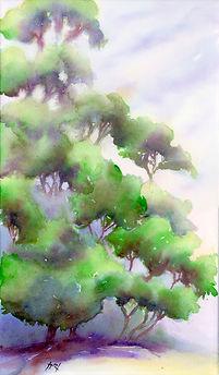 Grands arbres du Glandier.jpg
