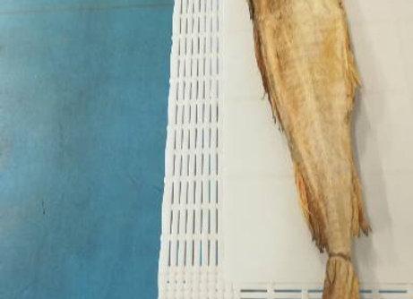 BACCALA'SECCO RAGNO 8-1000gr    €31.00/KG    €27.90 circa a pesce