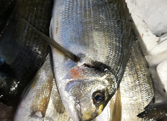 ORATA INTERA (VALLE APERTA SALATA) 600-800    €17.70/KG    €15.50 circa a pesce
