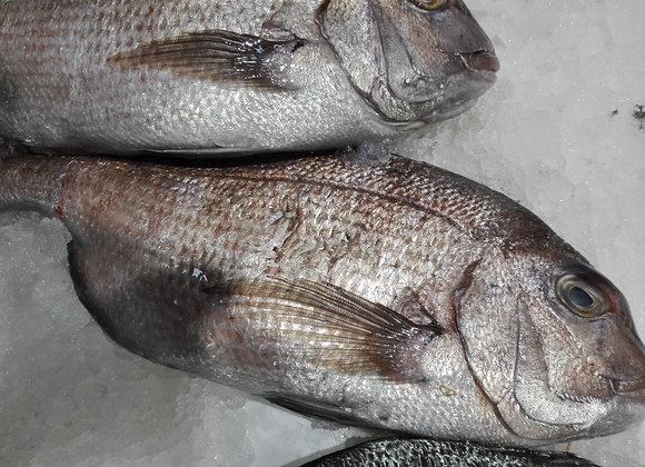 DENTICE PAGRO INTERO 400-700gr    €15.70/KG     €8.63 circa a pesce