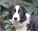 Hallie is outgoing and friendly and will be a great go-everywhere, do-everything dog.