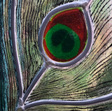 Close-up of the eye
