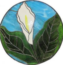 Arum lily window