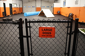 large dog entrance.JPG