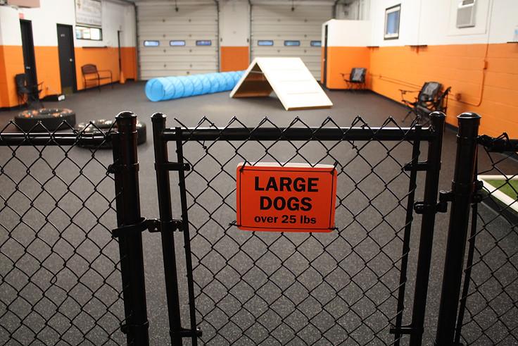 large dog entrance.JPG