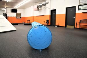 large dog room 6.JPG