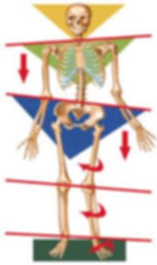 Avaliação Postural Colombo Quiropraxia