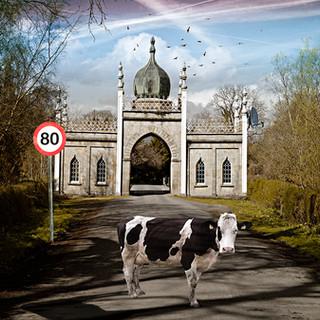 Sacred cow.