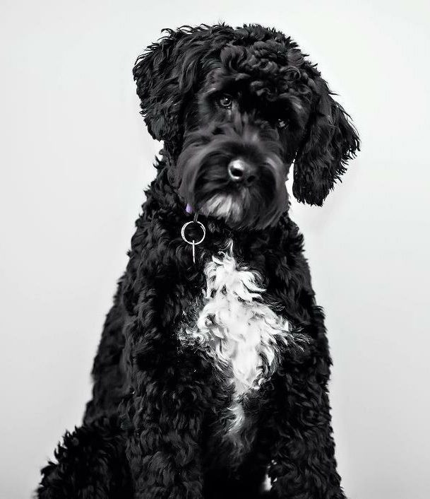 Ondulado_Ruby_MaggieMack_Pup