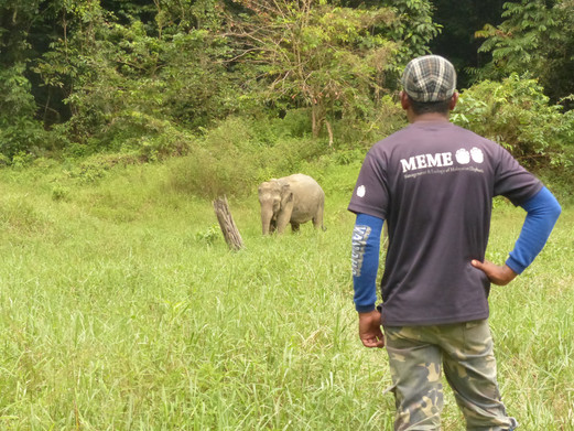 The Past, Present and Future of Elephant Landscapes in Asia