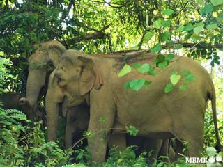 22 Sept 2020 – Big mammals don't get enough love