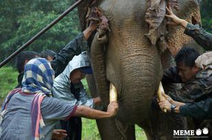 2 Jul 2013 - Jumbo Watch New Dawn in Elephant Research