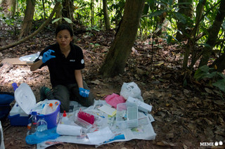 2 Jul 2013 - A Jungle Lab