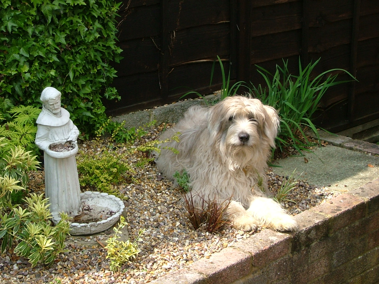 Darcey in garden.jpg