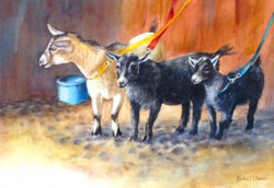 Pygmy Goats at the Competition