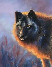 Noir Wolf