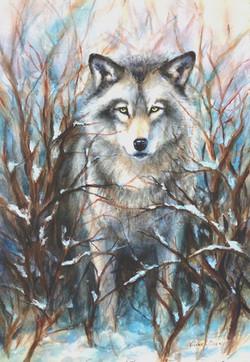 Wolfgang. -  Timber Wolf