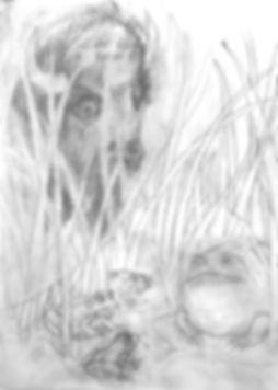 FROGS 1_edited.jpg